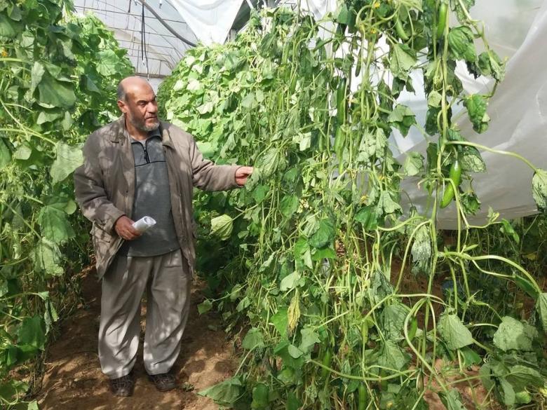 نحو مليون دولار خسائر القطاع الزراعي بغزة بفعل المنخفض