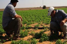 الاحتلال يسمح لمزارعي غزة بالاقتراب من الحدود