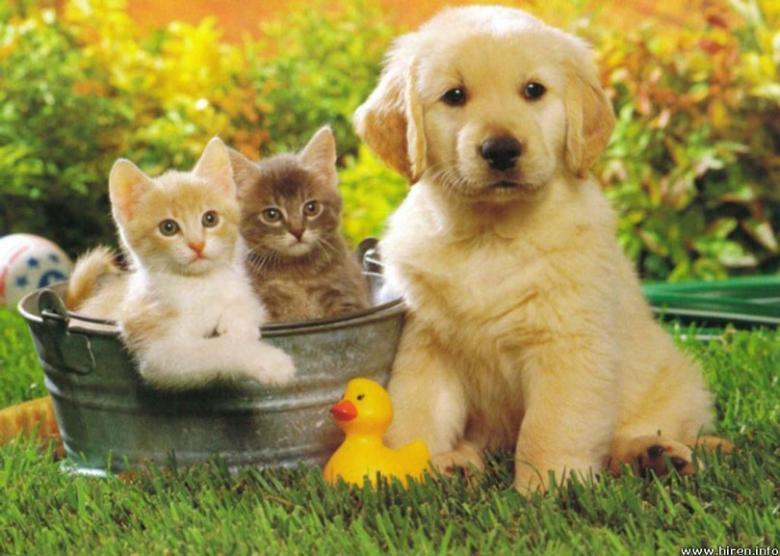 انتبه.. حيواناتك الأليفة لها دور باختيارك شريك حياتك