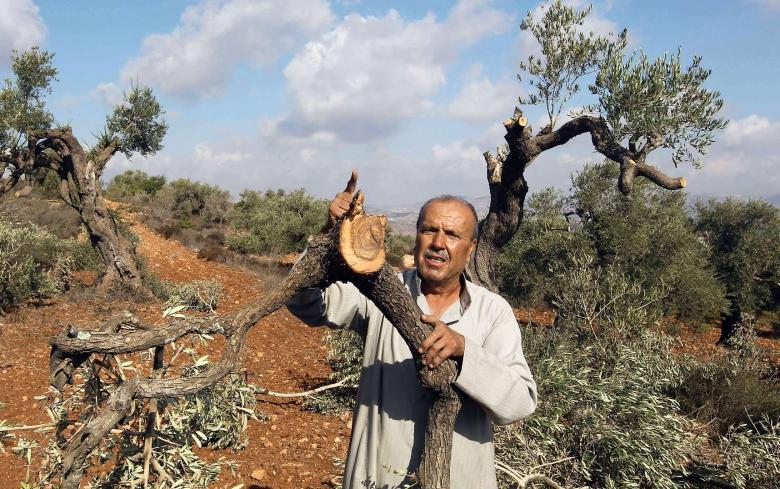 مستوطنون يقطعون 15 شجرة زيتون جنوب نابلس