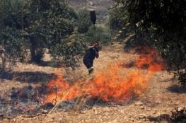 جنود الاحتلال يتسببون بحريق عشرات أشجار الزيتون بسلواد