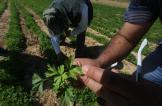 تزييف العلامات الدولية والتدليس التجاري يغزوان قطاع المبيدات الحشرية