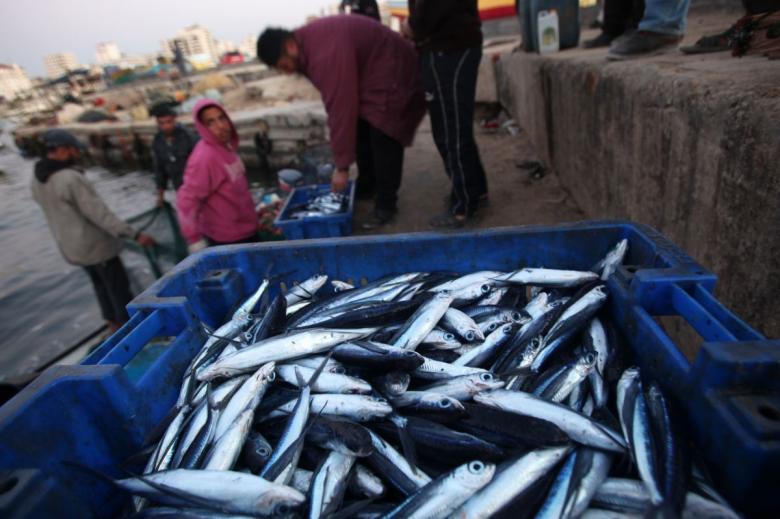 بيان هام من الاقتصاد والزراعة بشأن تسويق الأسماك للخارج