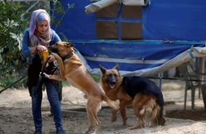 الفلسطينية تاليا ثابت أول مدربة  كلاب بغزة