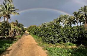 جمال الطبيعة في قرية الزوايدة وسط القطاع