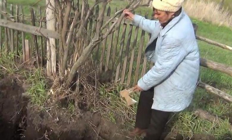 ذهب ليزرع البطاطا فاكتشف أن زوجته قاتلة