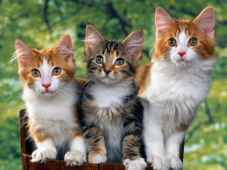 سنغافوري يحاول تهريب 4 قطط داخل بنطاله