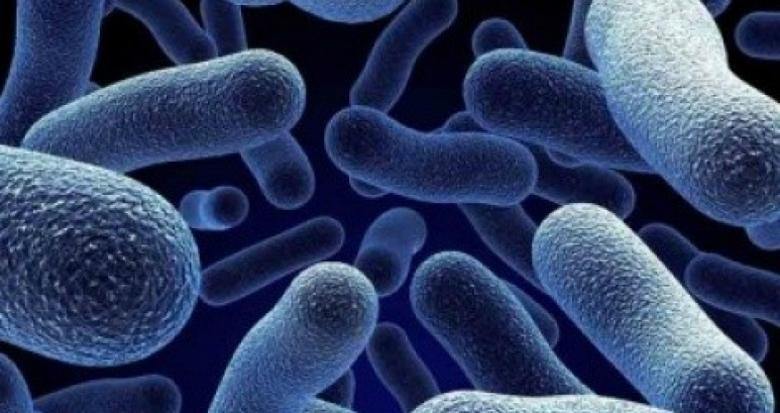 هذه البكتيريا تُسبب السمنة