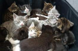 ممرضة لندنية تعثر على 15 قطة داخل حقيبة سفر