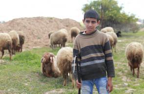 مهنة رعي الأغنام في المناطق الحدودية الشرقية لغزة