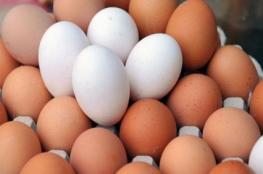 3.5 ملايين بيضة ستدخل قطاع غزة شهريًّا