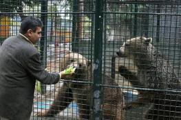 دب يلتهم يد طفل بحديقة حيوان بالضفة المحتلة