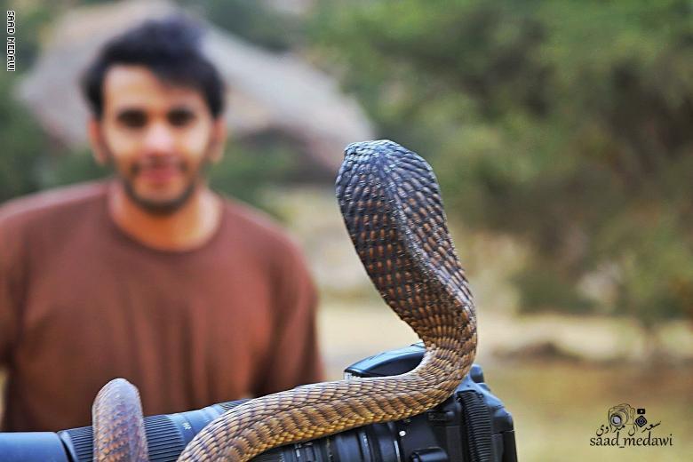 سعودي يوثق أكثر الثعابين السامة بالعالم