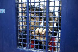 الاحتلال يثبت الاعتقال الإداري لأسرى فلسطينيين