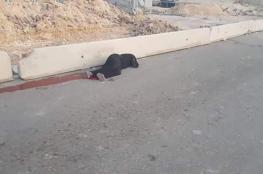هكذا عقبت حماس على إعدام الاحتلال فتاة بالضفة