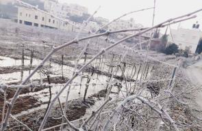 الصقيع الذي ضرب عدة مناطق في فلسطين، صباح اليوم.