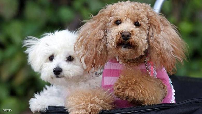 مدينة أوروبية تفرض ضريبة على تربية الكلاب