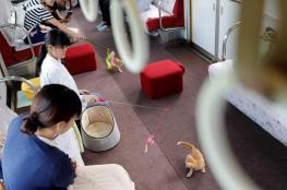"""اليابان.. قطط """"ضالة"""" تتجول بالقطارات للتوعية"""