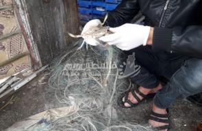 استمرار موسم صيد الجلمبات بقطاع غزة