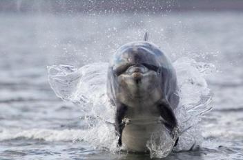 ما سر نفوق الدلافين والحيتان على سواحل بريطانيا؟