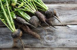 5 نباتات تساعدك في التغلب على مشاكل الجهاز الهضمي