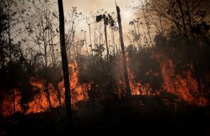 رئة العالم ... غابات الأمازون تستعر بآلاف الحرائق