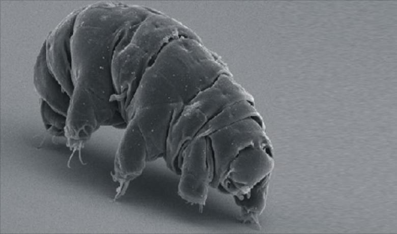 علماء يكتشفون سرّ أكثر الحيوانات مناعة في العالم