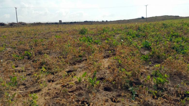 """""""العمل الزراعي"""" ينهي استصلاح 26 دونما زراعيا شرق جباليا"""