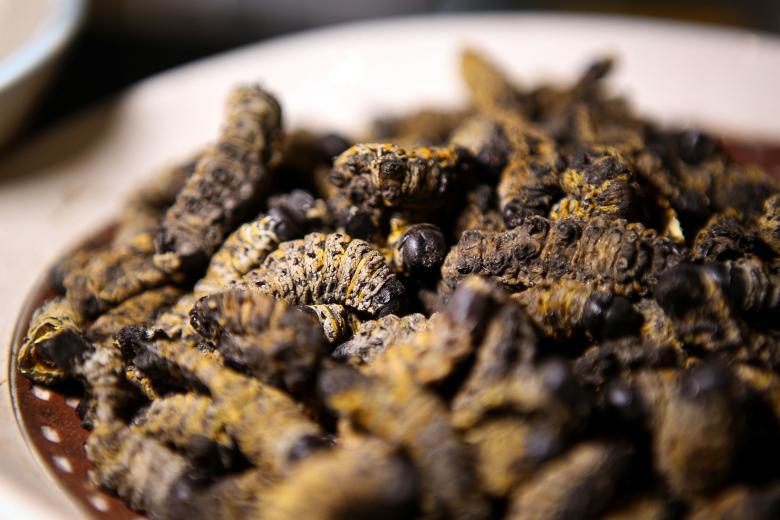 افتتاح أول مطعم بجنوب أفريقيا يقدم وجبات من الحشرات فقط