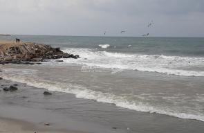 طائر النورس يُغازل مياه بحر غزة