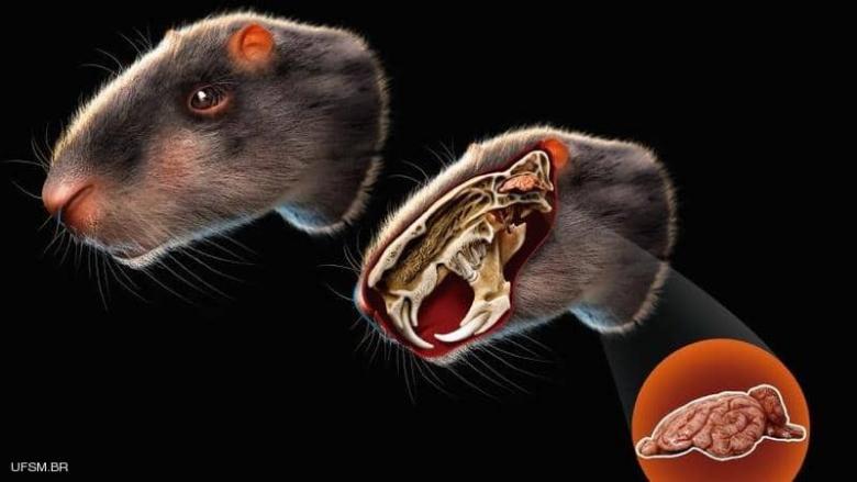 """فأر بحجم إنسان.. علماء يدرسون """"لغز القارض العملاق"""""""