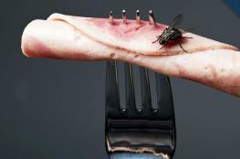 ماذا يحدث حين تقف ذبابة على طعامك؟