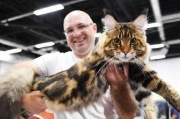 العثور على قط عملاق في الولايات المتحدة (صورة)