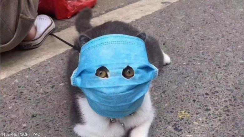 """الصينيون يصنعون أقنعة لقططهم خوفا من عدوى """"كورونا"""""""