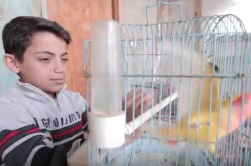 """طفل فلسطيني يجسد """"حلم المصالحة"""" بطيوره التي يعشقها"""