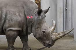 عملية دولية مشتركة تضبط آلاف الحيوانات المهددة بالانقراض