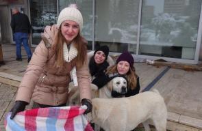 أتراك يخرجون لتغطية الكلاب الضالة من البرد
