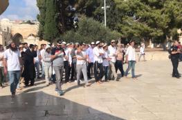 الاحتلال يعتقل حارسًا والمستوطنون يستأنفون اقتحاماتهم للأقصى