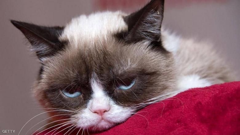 """""""القط الغاضب"""" يفارق الحياة ويترك """"ثروة كبيرة"""""""