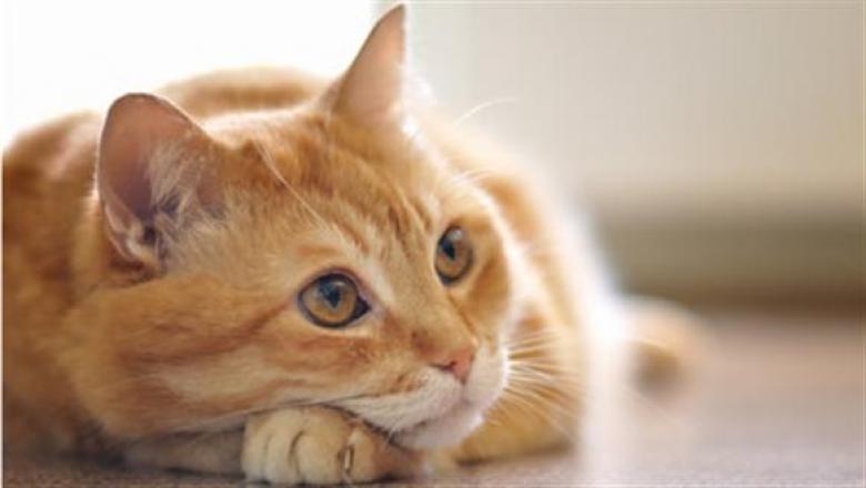 تحرير 500 قطة في الصين