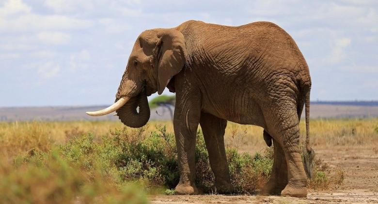 ترامب يسمح باستيراد أنياب الفيلة من أفريقيا