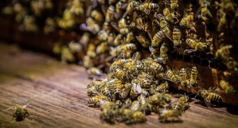 شراكة بين الروبوتات والنحل لتحسين حماية البيئة