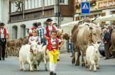 قرون الأبقار تثير أزمة في أغنى بلد أوروبي ودعوة للاستفتاء