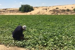 الزراعي يوقع اتفاقية مشروع استصلاح 400 دونم بخانيونس