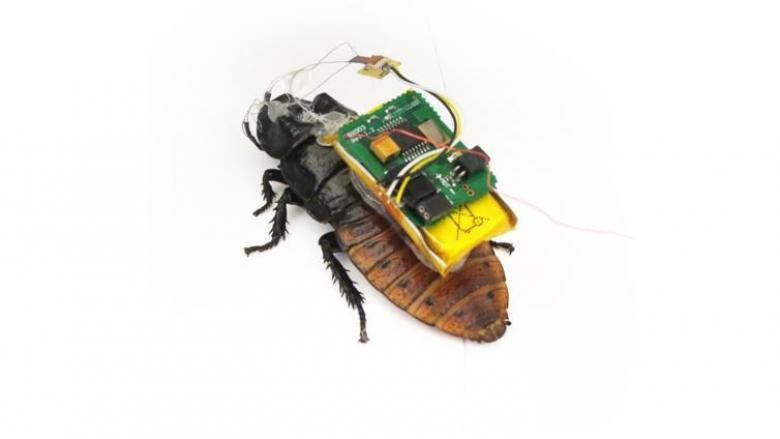 هكذا تستخدم أجهزة الأمن الحشرات للتجسس عليك!