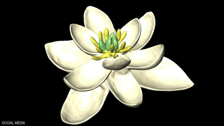 علماء يكتشفون شكل أول زهرة في العالم