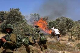 مستوطنون يضرمون النار بحقول زراعية شمال نابلس