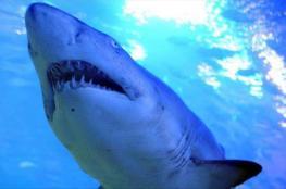 تأجيل مسابقة بحرية بأستراليا إثر هجوم سمكة قرش