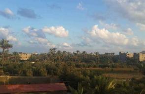 غزة تستعد لحصد موسمي البلح والزيتون