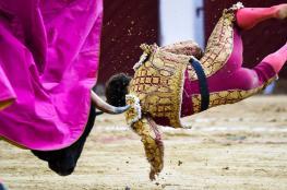 نطحة قاتلة من ثور لرجل في مهرجان تودي بحياته